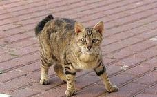 Una joven pierde la sensibilidad en las piernas durante 9 meses al contagiarse de una enfermedad por un gato