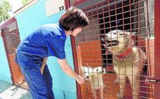 Podemos acusa al Gobierno regional de boicotear su propia ley de Bienestar Animal