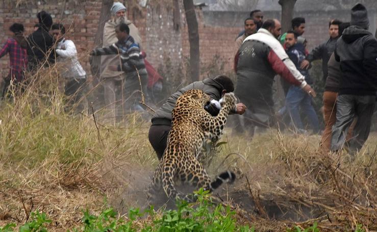 Un leopardo siembra el pánico en la India