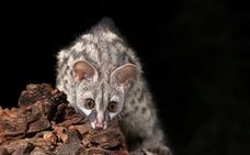 Los mamíferos del Sureste, esos desconocidos