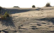 Expertos analizan las mejoras del espacio natural de las Salinas de San Pedro y las dunas de la Llana