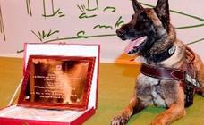 Adiós con honores a Elton, el perro que encontró a Diana Quer y al pequeño Gabriel