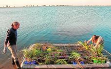 Cinco islas servirán de nido a las aves en Cabezo Beaza
