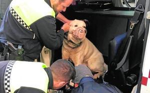 La Policía Local de La Unión rescata en dos años a 150 mascotas abandonadas o extraviadas