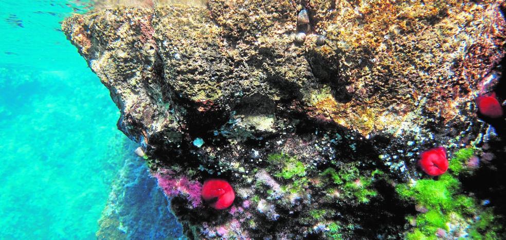 Mazarrón y Cabo Tiñoso, a golpe de clic