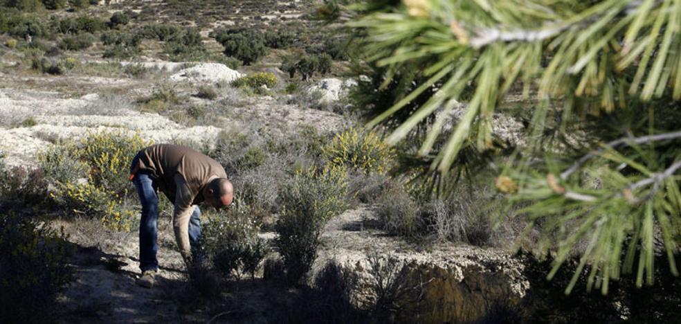 'Un millar de árboles' para frenar el desierto
