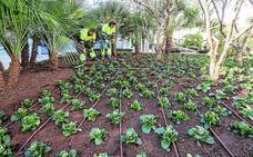 Adornan varios jardines públicos con 4.000 plantas