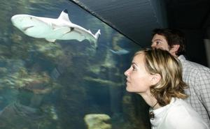 Más de 1.400 escolares murcianos podrán visitar gratis el acuario de la UMU