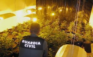 Desmantelan una plantación de marihuana en una vivienda ocupada ilegalmente en Totana