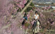 Floración en Cieza a caballo