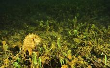 Contando caballitos en el Mar Menor