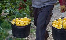 El arte de cortar limones