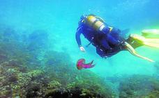 Casi 41.000 buceadores hicieron 67.000 inmersiones el año pasado en la Región
