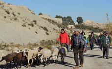 Abarán defiende sus vías pecuarias y la ganadería extensiva en su VI Marcha Ganadera por La Pila