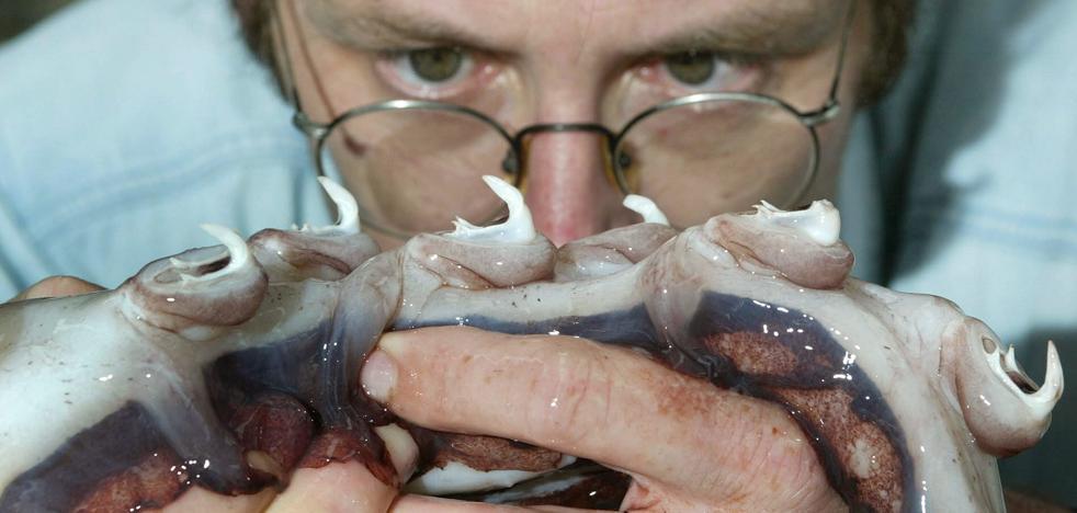 Dientes de calamar para sustituir al plástico