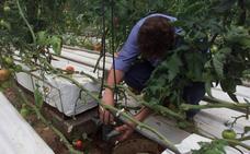 ¿Cuánta agua es necesaria para llenar el frigo con fruta y verdura de la Región?