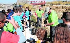 Plantan 600 árboles junto al río Segura en Alguazas