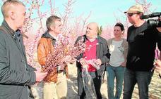 Las ramas de frutales se venderán como elementos de adorno