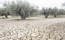 La falta de lluvias condena a los cultivos de secano del norte de la Región