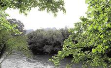 Plantación de bosque de ribera en Lorquí