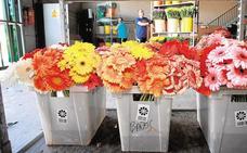Las flores y plantas ornamentales de la Región pierden posiciones en el exterior