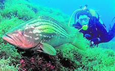 Un buceo más responsable en las reservas marinas