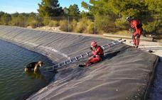Rescatan a un perro de una balsa de riego de Cieza