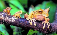 'Especies Lázaro': animales que han aparecido cuando se les creía extintos