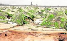 El consejero pide rebajas del IRPF para las explotaciones agrarias y ganaderas