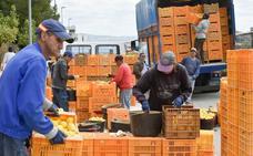 La exportación de frutas y hortalizas alcanza el récord de 2.500 millones de euros