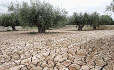 Más de la mitad de la superficie regional sufre procesos de erosión y desertificación