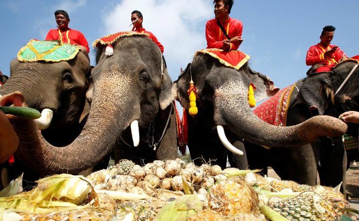 Día Nacional del Elefante