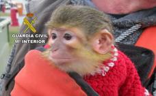 Rescatan a un mono tití explotado en las fiestas de Carnaval de Águilas