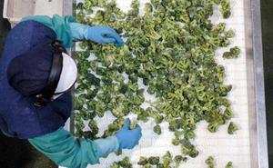 La Región de Murcia produce 3 de cada 10 toneladas de verdura congelada en España