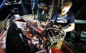 Hallan 40 kilos de plástico en el interior de una ballena muerta en Filipinas