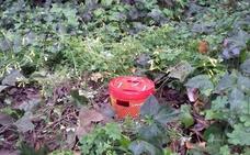 Parques y jardines de Murcia instalan trampas para el control y la medición del picudo rojo