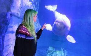 La lengua de las belugas