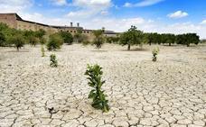 La Región despide el invierno más seco desde hace 78 años