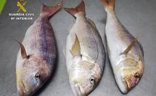 Sorprenden a un pescador furtivo en la reserva marina de Islas Hormigas