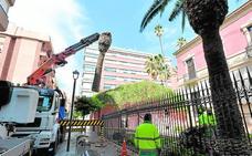 Arrancan las palmeras muertas por el picudo en el jardín del Huerto Ruano