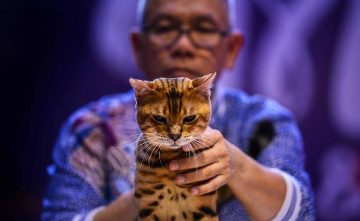 En busca del mejor gato