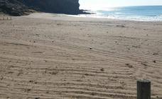 Arrasan con un tractor la vegetación protegida de las playas de Calnegre