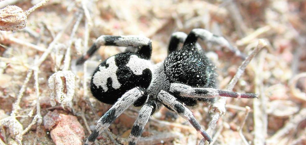 Las arañas extienden su red en la Región