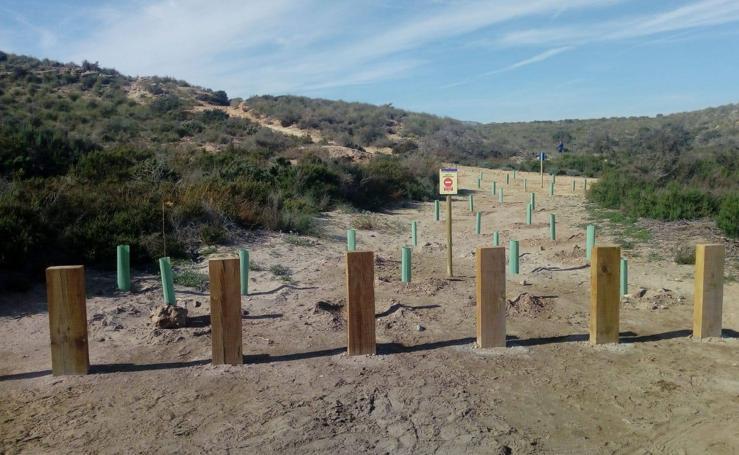 Restauración ambiental en Cuatro Calas