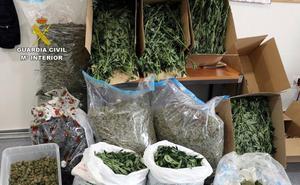 Once detenidos en la Región por exportar marihuana a Europa