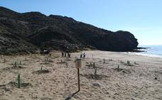Medio Ambiente comienza a reponer la vegetación arrancada en las playas de Calnegre