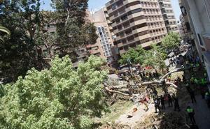 Reclaman más de 40.000 euros al Ayuntamiento de Murcia por los daños que causó el ficus de Santo Domingo