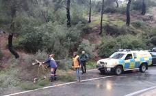 Árboles caídos y arrastres en carreteras, principales incidencias por las lluvias en Totana