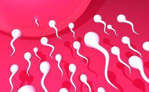 El 15% de los hombres son infértiles, según una investigación de la UMU