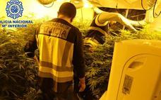 Dos iraníes destrozan un dúplex de Altorreal para convertirlo en un invernadero de marihuana